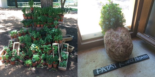 Sweet potato and herbs